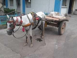 インドの荷馬車.jpg